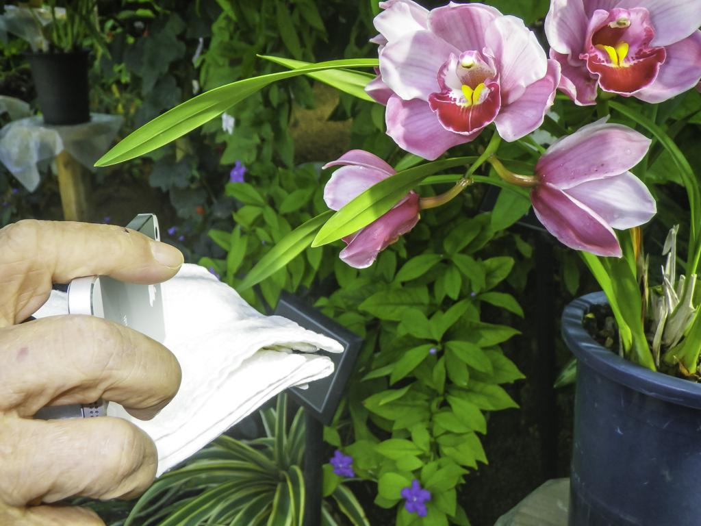逆光で白いタオルを花の下に置く
