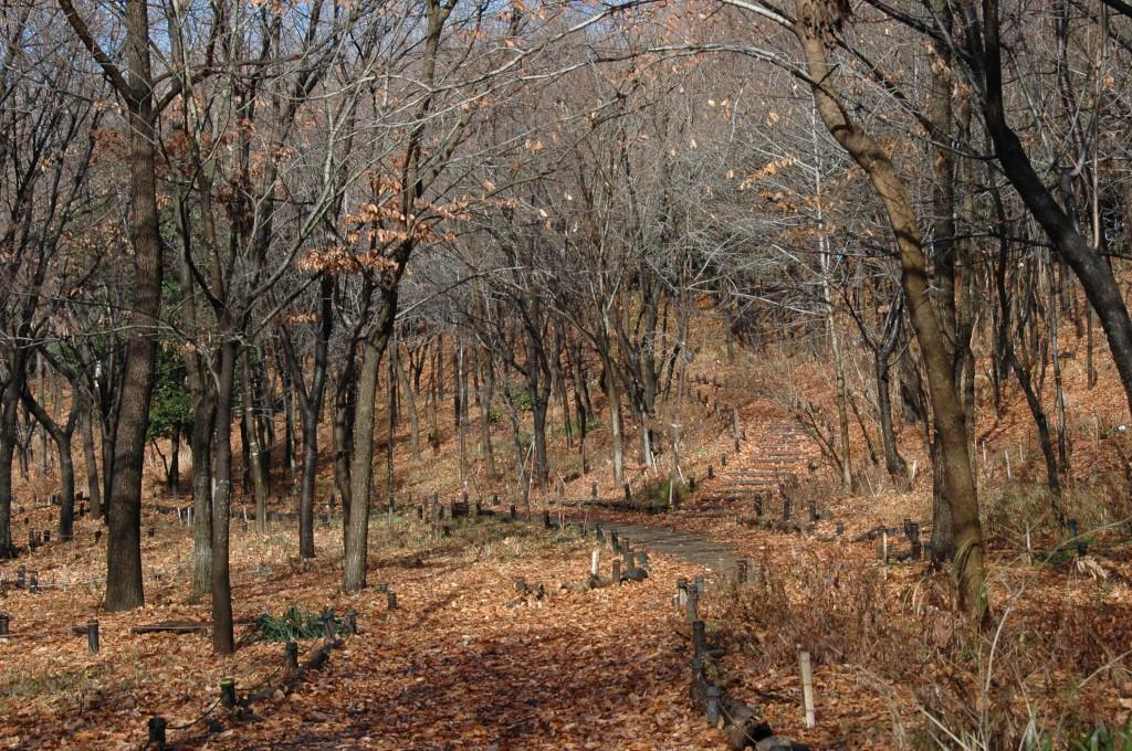 よく管理された雑木林の林床の冬枯