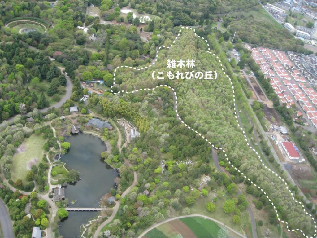 春、新芽が展葉した雑木林(点線内)<br>国営昭和記念公園