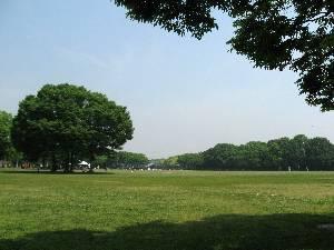 大泉緑地 大芝生広場