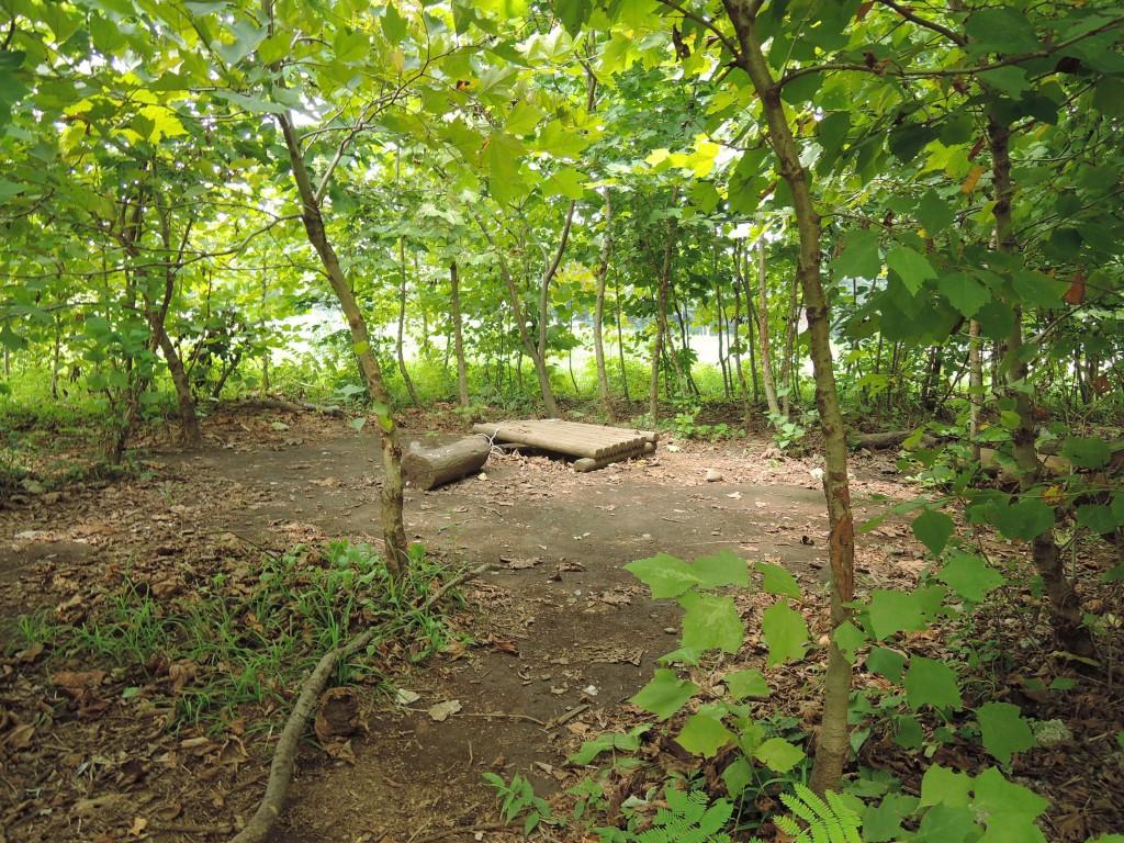 切らずに残した幼木の下には子供たちの秘密基地があります