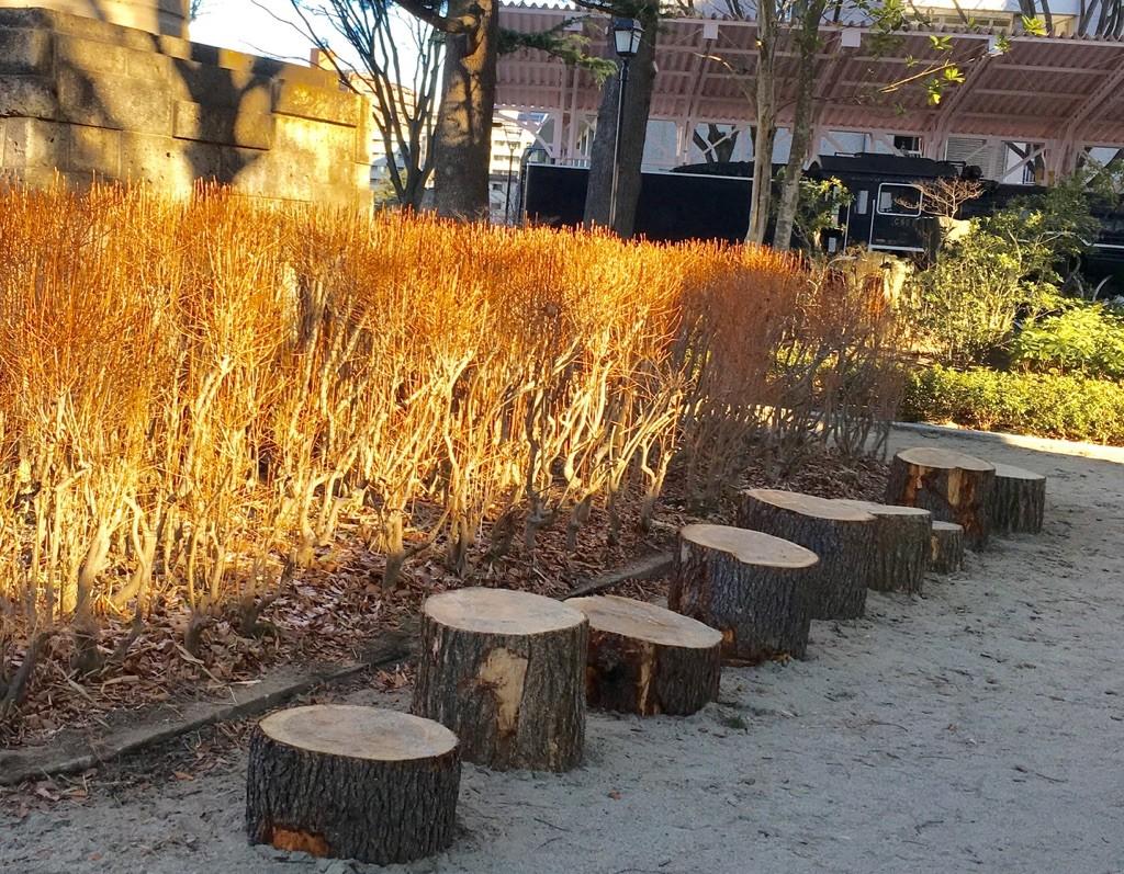 市の職員さんがベンチ用に設置した丸太