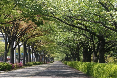 江戸川区の街路樹