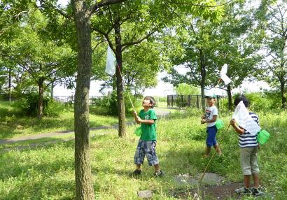 開始から1年間で約1,200人が参加した「虫とりアミを使った生き物とり」