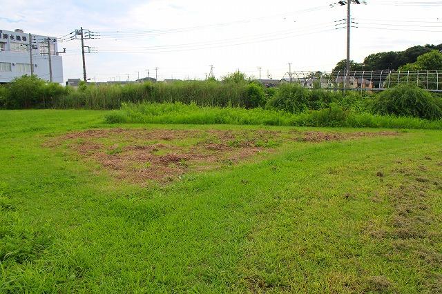 草刈の頻度やタイミングを変えることによって、草丈が異なる様々な草地を作り出しています