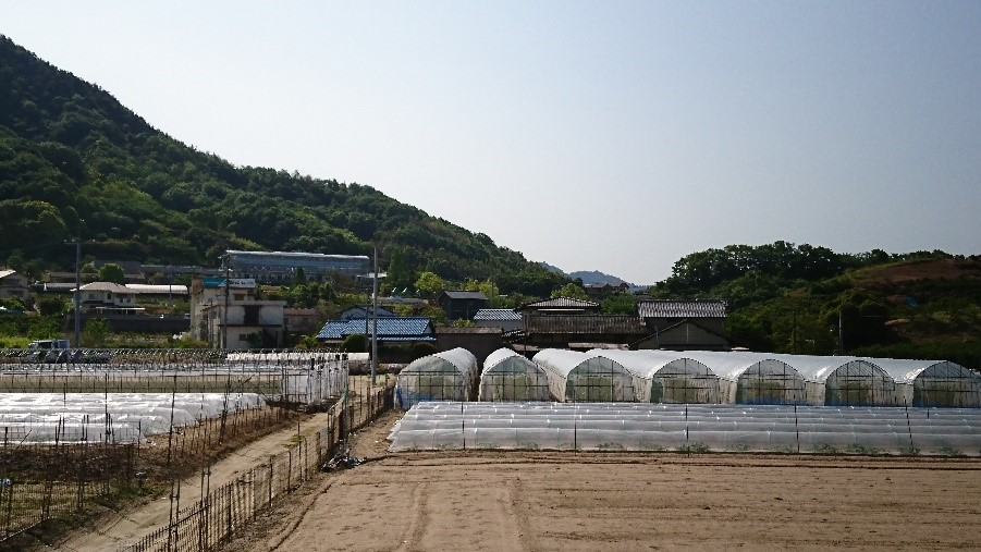 写真6 ビニールハウス群の後背地に見える植物園の温室