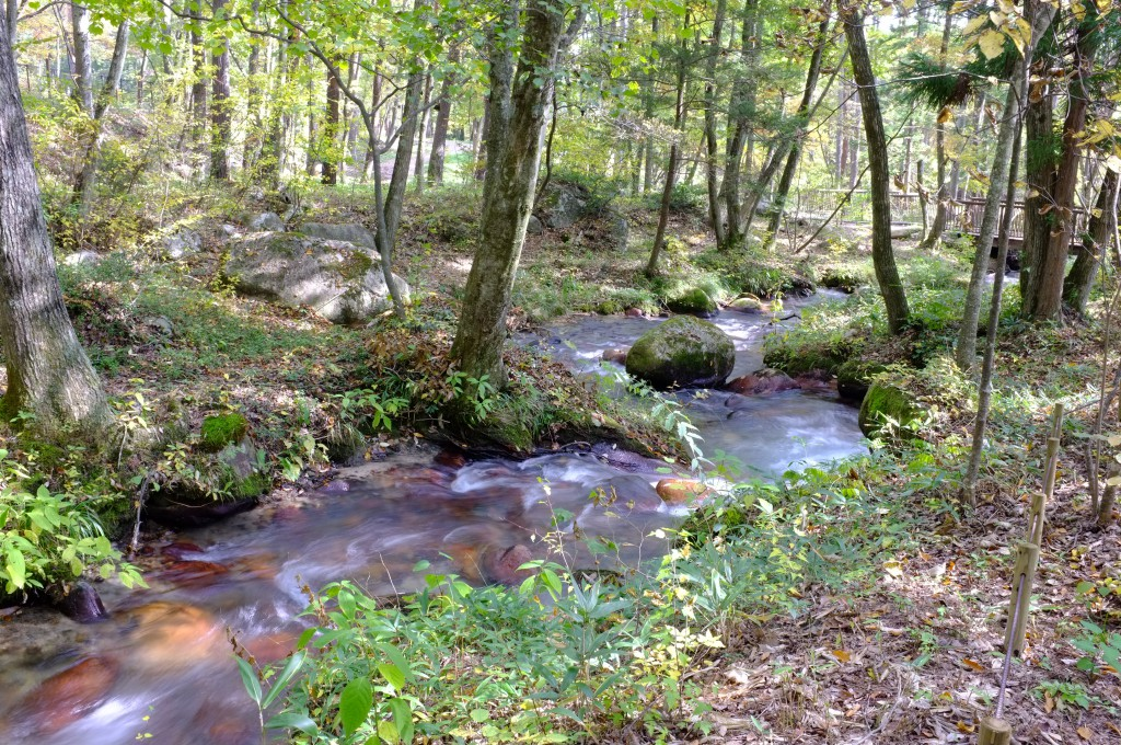 人と森が身近に接することができる           (国営アルプスあづみの公園)