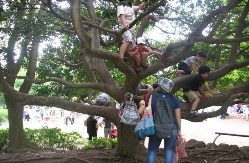 登らずにはいられない「子どものなる木」