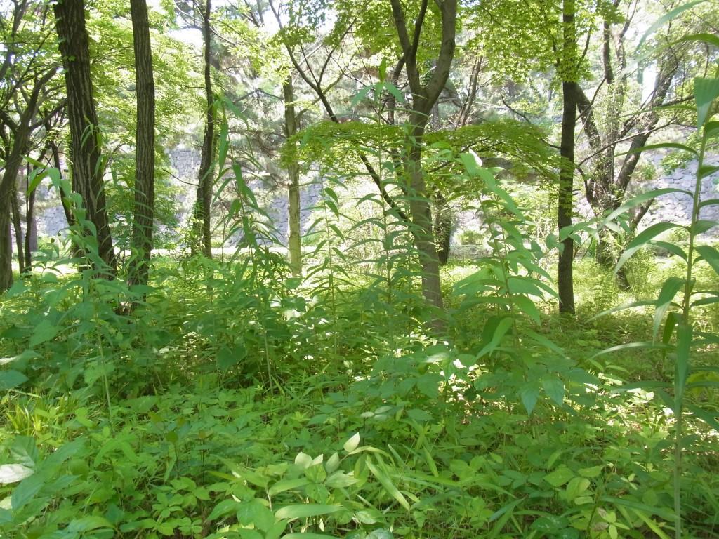 皇居 二の丸雑木林