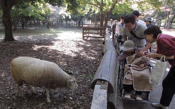 大泉緑地には羊が3頭います