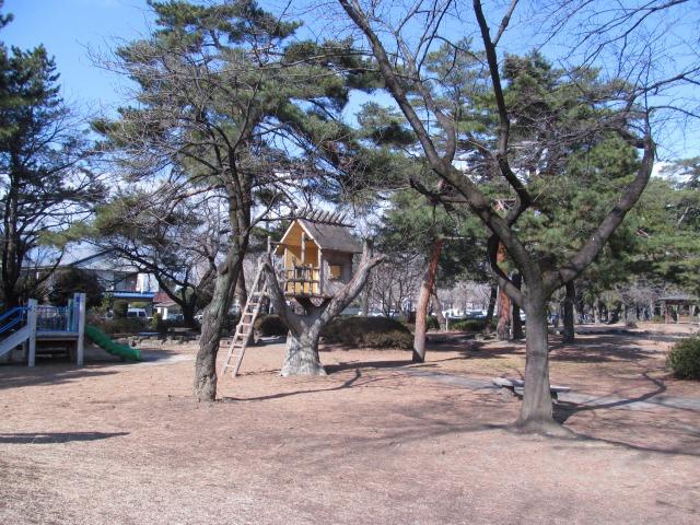 前橋市の管理する松林がある北側