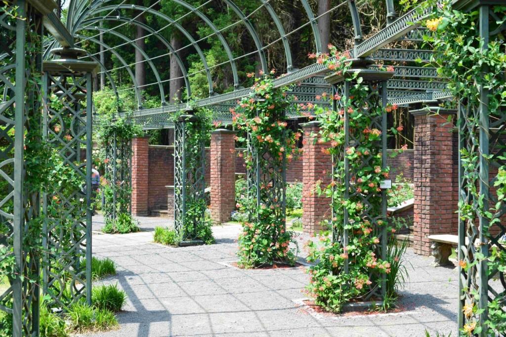 秘密の花苑のハニーサックル