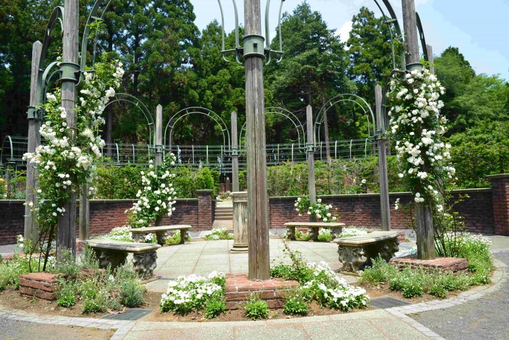白い花の咲く植物を集めたエリア(秘密の花苑中心部)