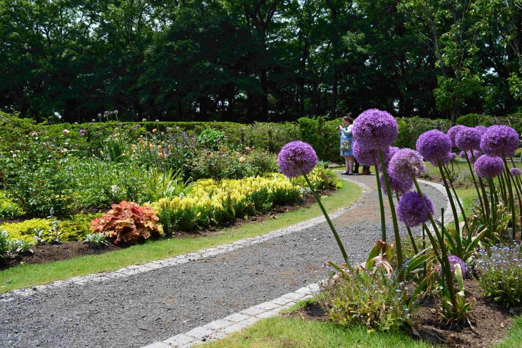 手入れの行き届いた秘密の花苑<br>(右手前の紫色の花はアリウム・ギガンチウム)