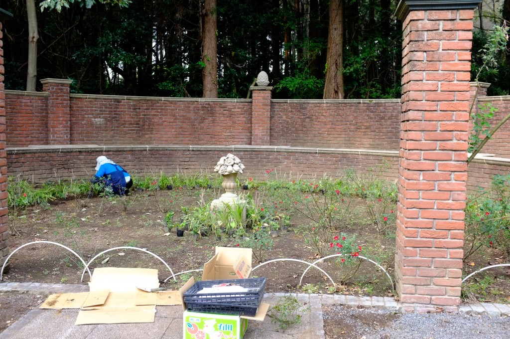寂しい花苑