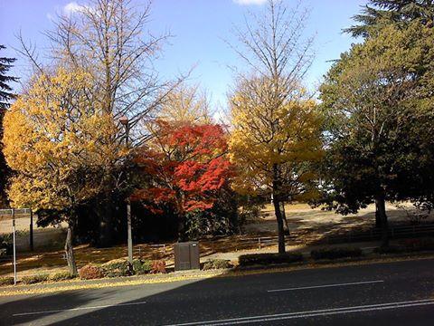 ビーアイの窓辺から見える西公園