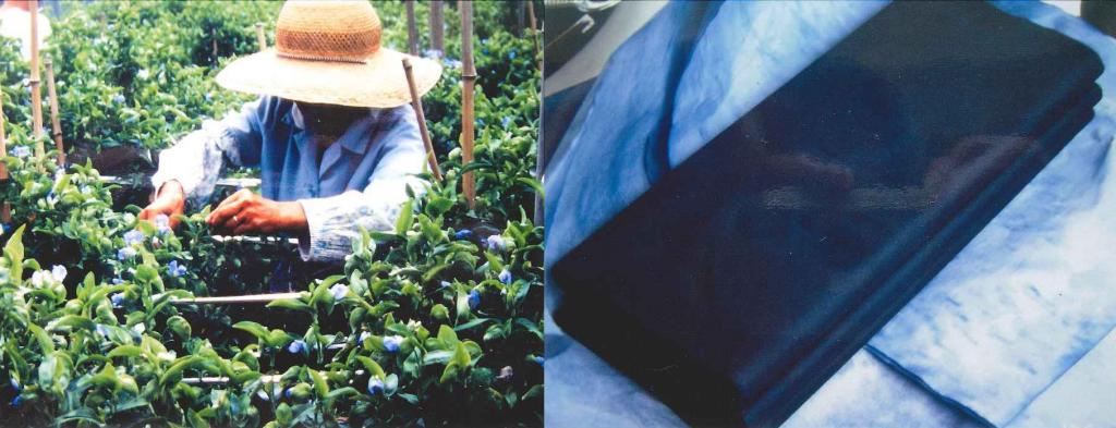 (左)オオボウシバナをつむ作業<br>(右)青花紙