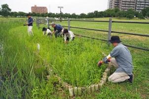 「尾久の原愛好会」の活動によって、希少な植物が育成されている