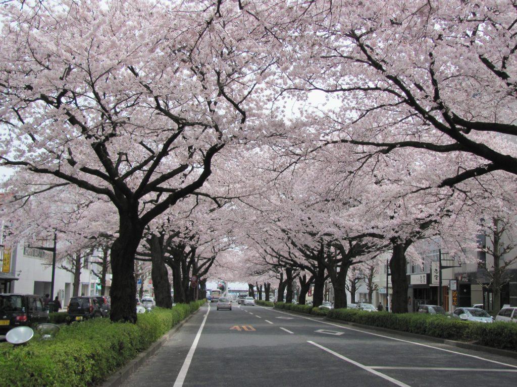 4月のさくらまつり期間中には歩行者天国になる日もある平和通り