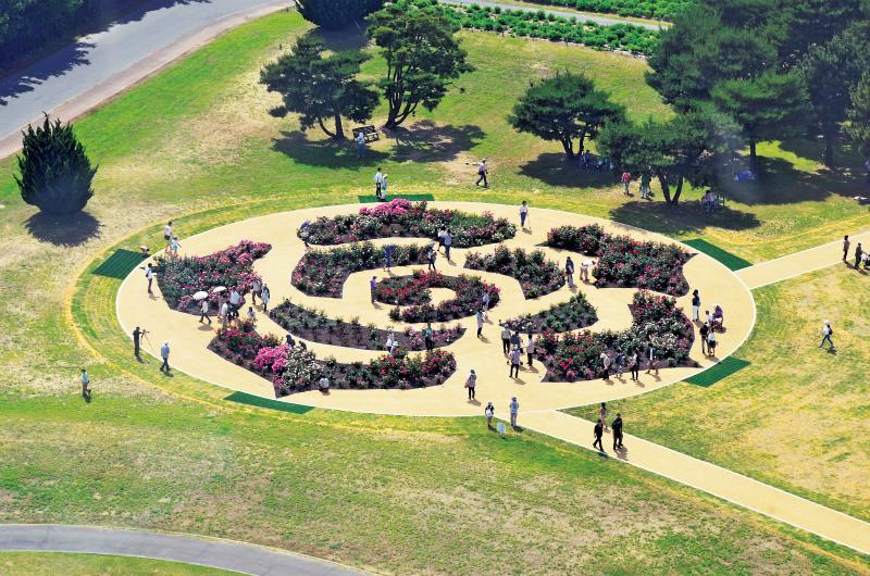 2014年秋にリニューアルした「常陸ローズガーデン」。人気の大輪のバラや、海浜公園に自生しているハマナスが植栽してある。施設管理も植物管理も業務課長の仕事