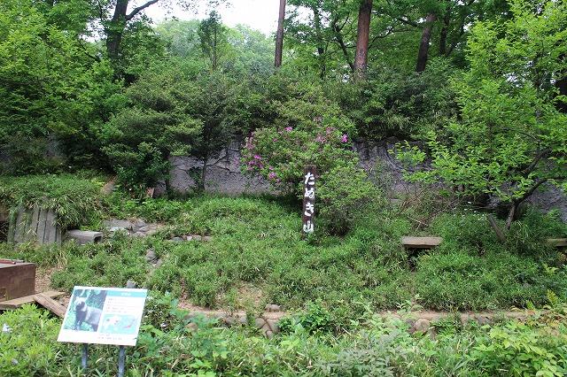 自然な感じのタヌキ山。柵がなく見やすい展示も多摩動物公園の特徴の一つ。