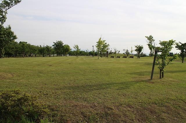 「虫取りもできない」ほどきれいに管理されているオレンジパーク。2004年3月に供用開始された第1期供用エリアは、今もきれいに管理されている。