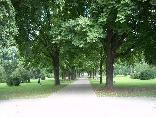 セイヨウトチノキの並木が園内を南北に通っている。