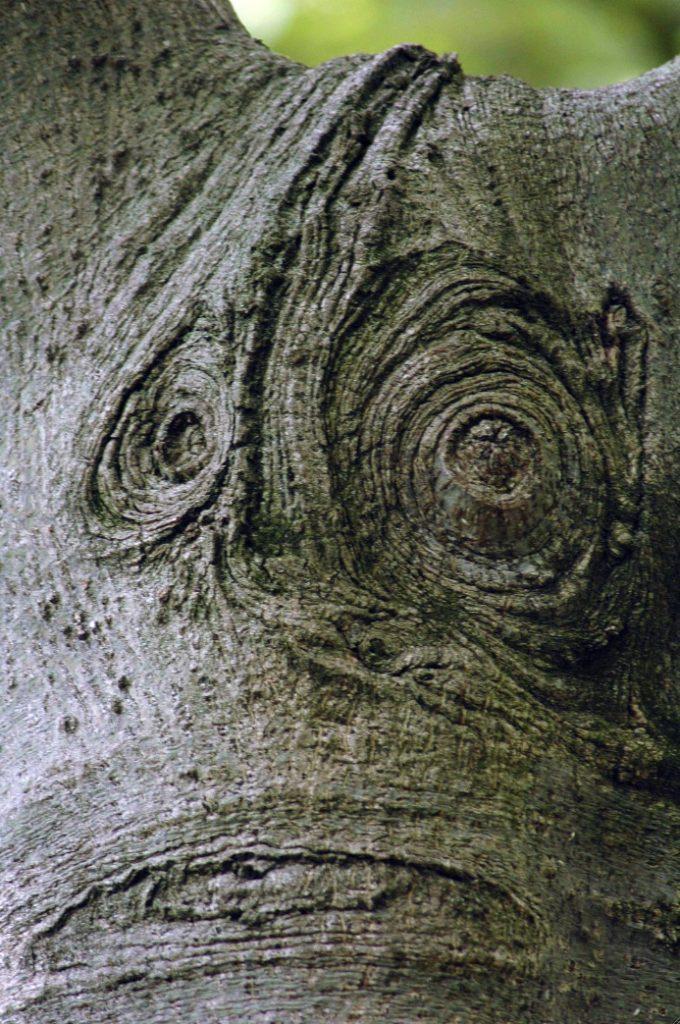 思い出深い俳優の津川雅彦さん似の珍樹。
