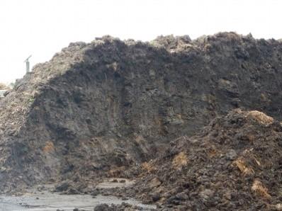 1年間堆積した植物発生材は下層がヘドロ化していた。