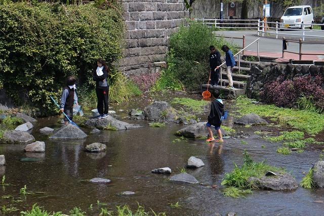 上江津湖には浅瀬があり、<br/>様々な生き物が見られる