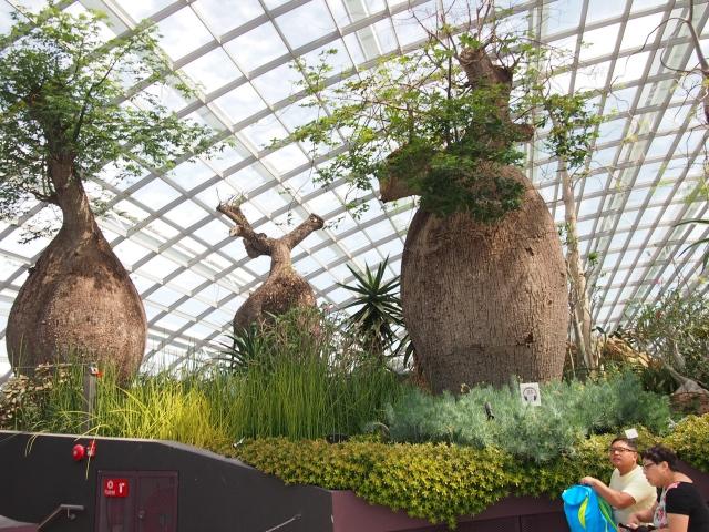 冷室に植栽された植物の説明はオーディオガイドで聞くことができる