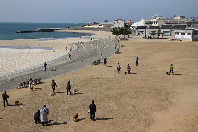 浜辺で散歩するマナードッグと一般の犬