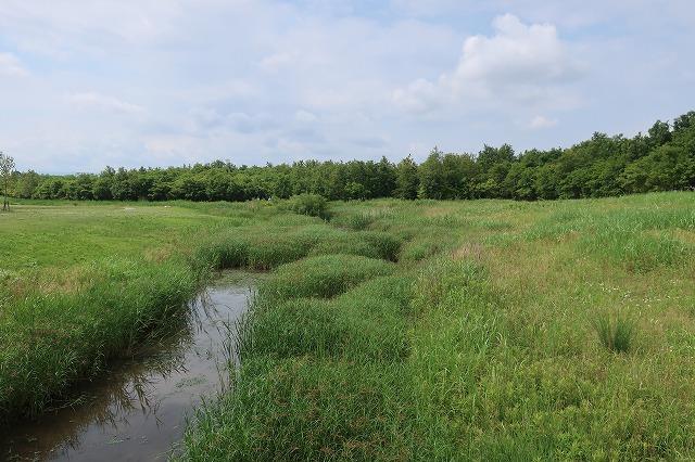公園内には河川の名残があり、豊かな環境を作り出している