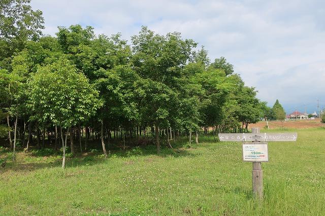 13年間にわたり植樹したため、様々な樹齢の森林がある「市民の森」