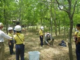 「びわこ地球市民の森のつどい2019」で間伐体験をする子供たち