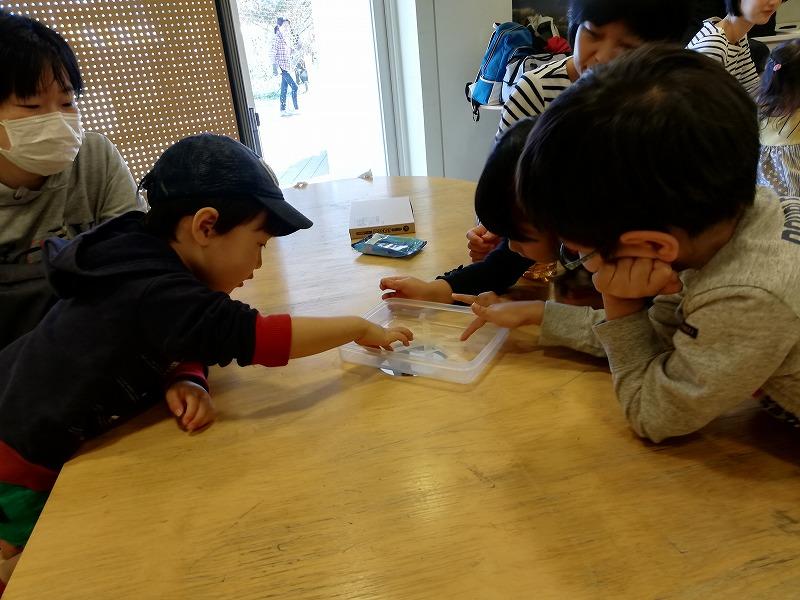 クモの巣のタテ糸とヨコ糸の違いを確認する子ども達