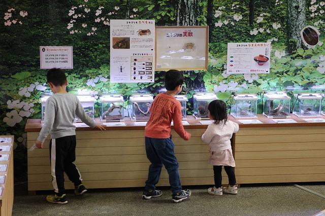 子供の目線に合わせた昆虫展示
