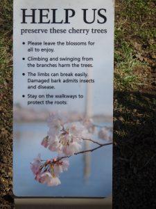 写真7 桜の保存を訴える表現