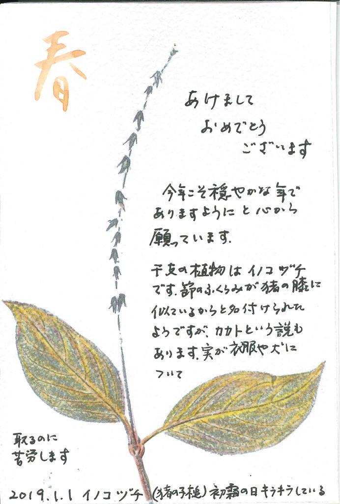 イノコヅチ