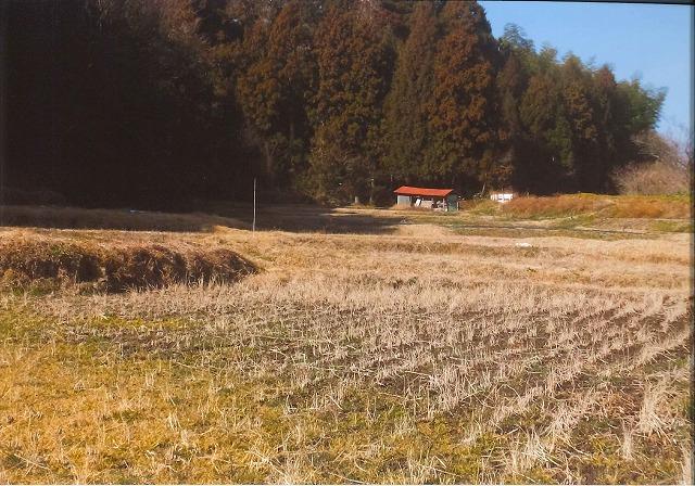 若菜を摘む早春の谷地田