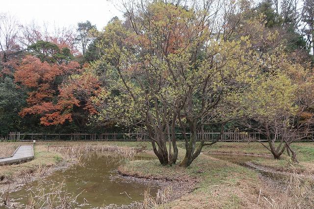子供の頃から遊んでいた通学路脇に<br>整備された亀山里山公園