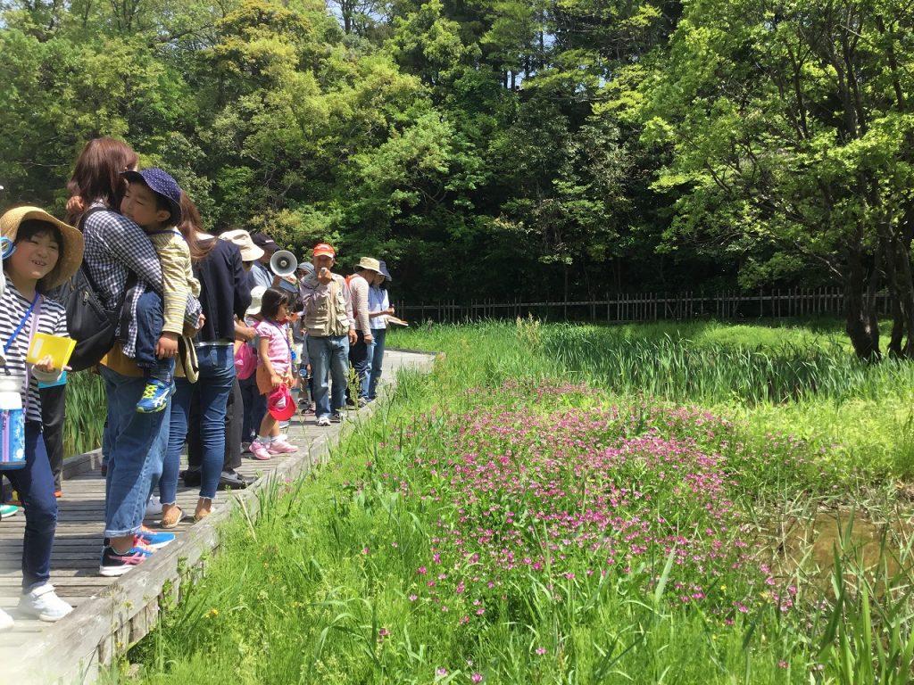 「親しむ会」が担当する植物観察会