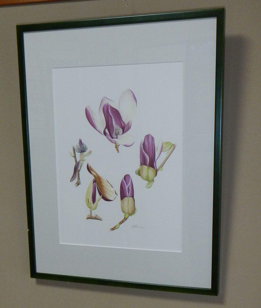 描くときにも植物をじっくり観察するため、植物の特徴もつかめる(シモクレン)