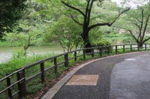 公園の園路はランニングができ、自転車も走ることができる