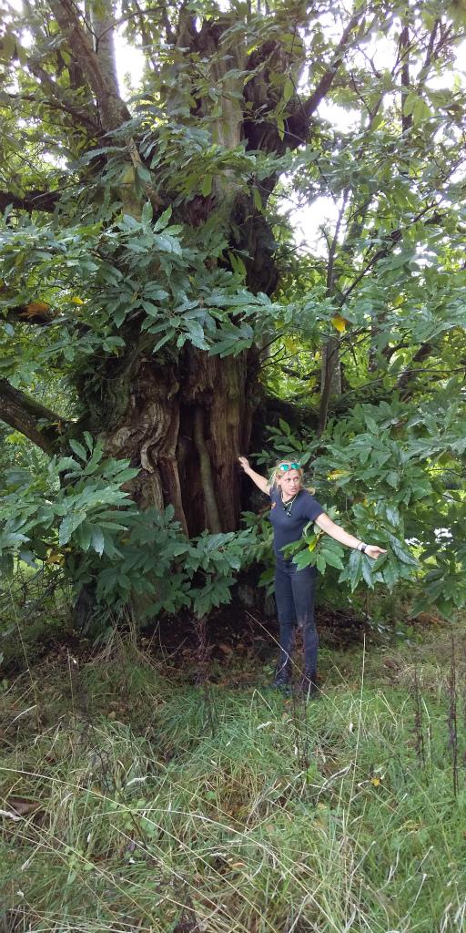 樹木はガーデナーによって大切に守られている。<br/>オークやメープルなどの木々の秋の紅葉は美しい