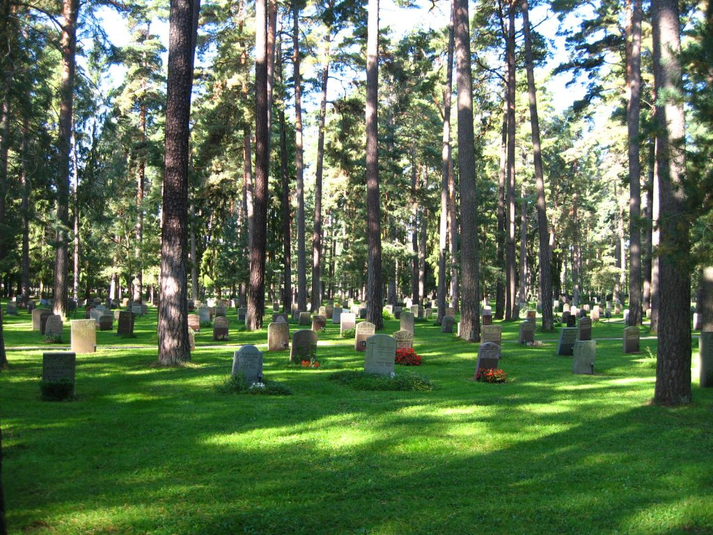 松林のマツの中には、樹齢200年を超えるものもある