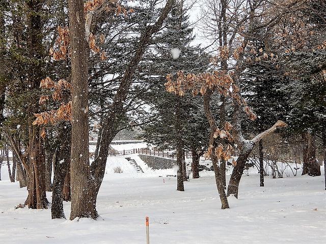 恵庭市では、12月中旬から4月上旬まで<br/>積雪がある(2月の園内の様子)