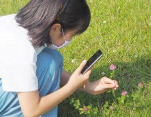 「自然発見ビンゴ」では、実際の植物を探し、写真を撮るため、自然と植物を覚えることができる
