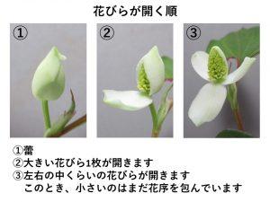 花びらが開く順