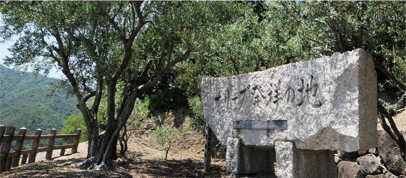 左手に写っているのは1908年に植栽された<br/>樹齢100年以上のオリーブの古木